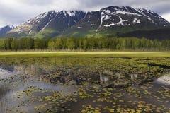 Montanhas Snow-covered com árvores e lago no Beau Foto de Stock Royalty Free