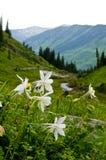 Montanhas, vales, e wildflowers Imagens de Stock Royalty Free