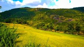 Montanhas verdes com campos caprichosos imagem de stock royalty free
