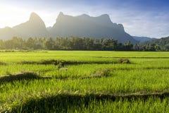 Montanhas verdes do campo e da pedra calcária de almofada do arroz em Vang Vieng, cidade de estância turística popular no Lao PDR fotografia de stock