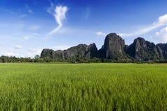 Montanhas verdes do campo e da pedra calcária de almofada do arroz em Vang Vieng, cidade de estância turística popular no Lao PDR foto de stock royalty free
