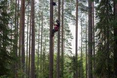 Montanhista da árvore acima em uma árvore com engrenagem de escalada fotografia de stock royalty free