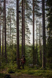 Montanhista da árvore acima em uma árvore com engrenagem de escalada Foto de Stock