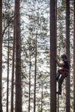 Montanhista da árvore acima em uma árvore com engrenagem de escalada Imagem de Stock Royalty Free