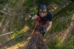 Montanhista da árvore acima em uma árvore com engrenagem de escalada Imagens de Stock