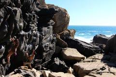 Montanhistas de rocha que bouldering em torno do litoral de Concon Imagens de Stock