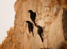 Montanhistas dos pássaros fotos de stock