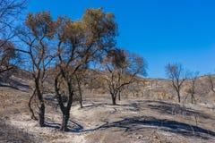 Montanhês queimado incêndio violento Fotos de Stock Royalty Free