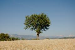 Montano de Paesaggio Foto de archivo libre de regalías