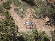 Montant en Bryce Canyon National Park, l'Utah, Etats-Unis Photographie stock