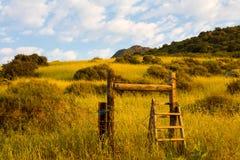 Montante de madera y campo herboso en luz de la mañana Imágenes de archivo libres de regalías