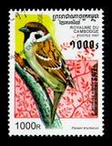 Montanus för förbipasserande för Eurasianträdsparv, fågelserie, circa 1997 Arkivbilder
