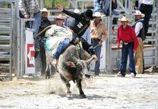 Montar a caballo de Bull del rodeo Imagen de archivo