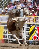 Montar a caballo de Bull - hermanas, favorable rodeo 2011 de Oregon PRCA Foto de archivo libre de regalías