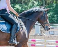Montar a caballo de la doma del deporte ecuestre en un curso de la doma foto de archivo libre de regalías