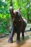 Montar a caballo de la mujer en un elefante Imagen de archivo libre de regalías