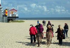 Montar a caballo del burro en la playa de Great Yarmouth. Imagen de archivo libre de regalías