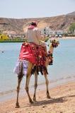 Montar a caballo del camello Imagen de archivo libre de regalías