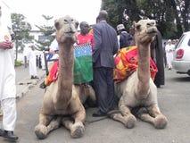 Montar a caballo del camello en África Imagen de archivo