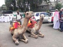 Montar a caballo del camello en África Fotografía de archivo libre de regalías