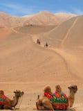 Montar a caballo del camello en dunas de arena Imágenes de archivo libres de regalías