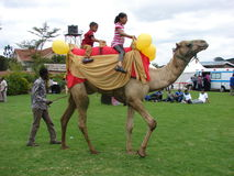 Montar a caballo del camello para el entretenimiento en Nairobi Kenia Imagen de archivo