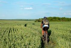 Montar a caballo del ciclista en un campo del trigo verde Imagen de archivo