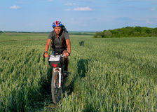 Montar a caballo del ciclista en un campo del trigo verde Foto de archivo