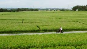 Montar a caballo del conductor de motocicleta en los campos del arroz Tiro al aire libre, paisaje del campo Viaje y fotograf?a de metrajes