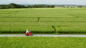 Montar a caballo del conductor de motocicleta en los campos del arroz Tiro al aire libre, paisaje del campo Viaje y fotograf?a de almacen de video