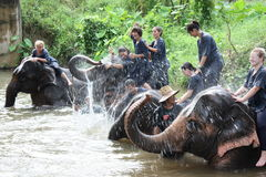 Montar a caballo del elefante Imágenes de archivo libres de regalías