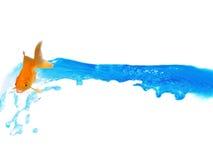 Montar a caballo del Goldfish que habla en salpicar el agua Imágenes de archivo libres de regalías