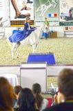Montar a caballo del jinete en un caballo blanco Moscú que libra a Hall International Equestrian Exhibition Imagen de archivo libre de regalías