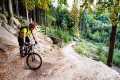 Montar a caballo del motorista de la montaña que completa un ciclo en bosque del otoño Fotografía de archivo libre de regalías