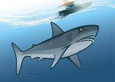 Montar a caballo del tiburón y de la persona que practica surf en onda de agua Foto de archivo