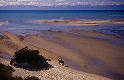 Montar a caballo en Abel Tasman Fotografía de archivo libre de regalías