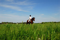 Montar a caballo en campo del heno Imagen de archivo libre de regalías
