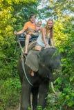 Montar a caballo feliz en un elefante, mujer de la familia que se sienta en el cuello del ` s del elefante Imagenes de archivo