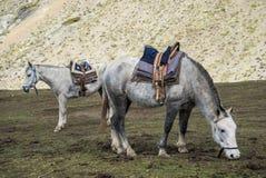 Montar a caballo a la montaña del arco iris fotografía de archivo libre de regalías