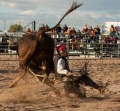 Montar a caballo profesional de Bull del rodeo Imagen de archivo