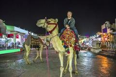 Montar un camello Fotos de archivo libres de regalías