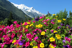 Montblanc view from Chamonix valley through flowers. Beautiful rocky peaks of the Alps on Montblanc hiking route stock photography