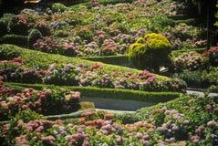 Montclair trädgårdar, Montclair, NJ Arkivfoto