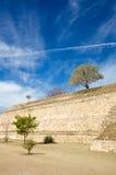 Monte奥尔本瓦哈卡小树和灌木在倾斜ancien 免版税库存图片