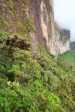 monte岩石roraima陡峭的墙壁 库存图片