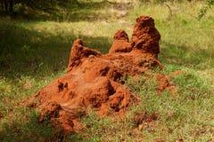 Monte africano da térmita Fotografia de Stock
