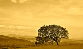 Sepia Monte Alban Landscape, Oaxaca, Mexico Stock Photography