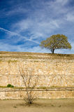 Monte Alban Oaxaca small tree and bush on the slopes of ancient. Structure with sky Stock Photo