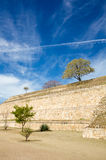 Monte Alban Oaxaca small tree and bushes on the slopes of ancien. T structure and sky Royalty Free Stock Images