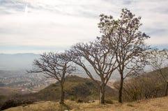 Monte Alban Oaxaca small trees above Oaxaca valley. Mexico Royalty Free Stock Photography